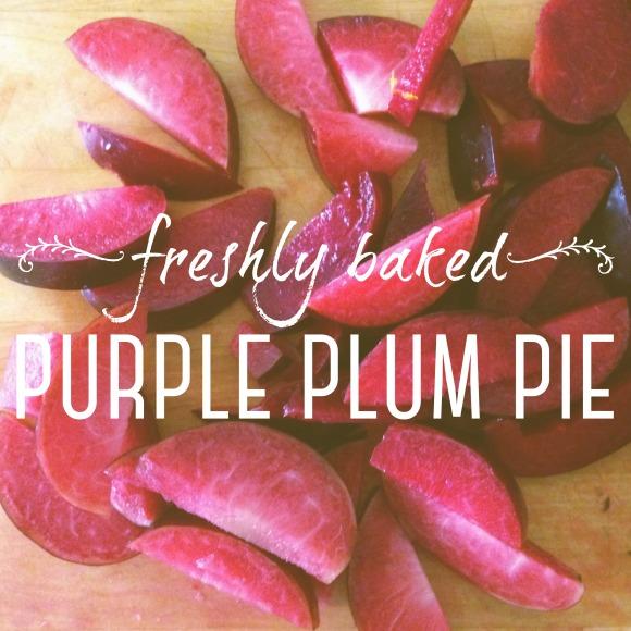 Purple Plum Pie-01